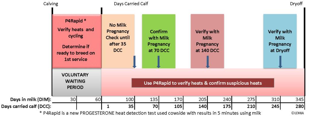 P4 Rapid Head Confirmation Chart